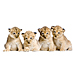 Large 4 Lion Cubs Graphic