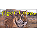 Tiger Lover Plate