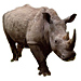 Large Rhino Graphic